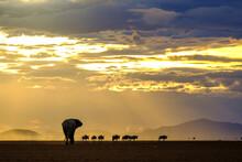 Elephant And Wildebeest Walking On The Amboseli Dry Lake At Sunset