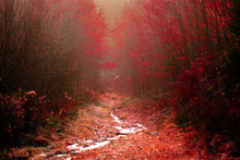 Path Towards An Enchanted Forest In Late Autumn.
