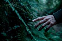 Hand, Nature