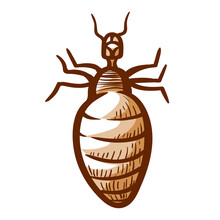 Louse Hand Drawn Icon. Lice, Crawler Pictogram. Wingless Insect Living Among Human, Animal Hairs.