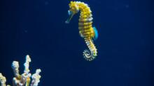 Underwater World, Corals, Fish, Aquarium.
