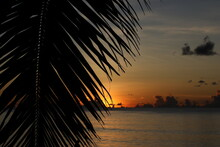 A Romantic Tropical Sunrise On The Beach With A Hot Orange Sky And A Black Cloud On The Horizon.Close-up Silhouette Of A Palm Leaf.View Through A Branch.Conceptual Image Of Ideal Rest And Relaxation