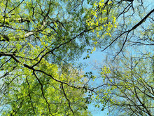Low Angle Shot Of Branches With Green Leaves Against Blue Sky