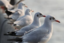 Group Of White Seagull Standing On The Fence