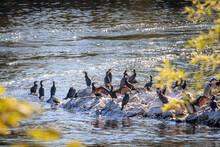 Des Oiseaux Aquatiques Entre Les Branches