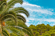 Abstract Palm Tree Leaves, Blue Sky Background