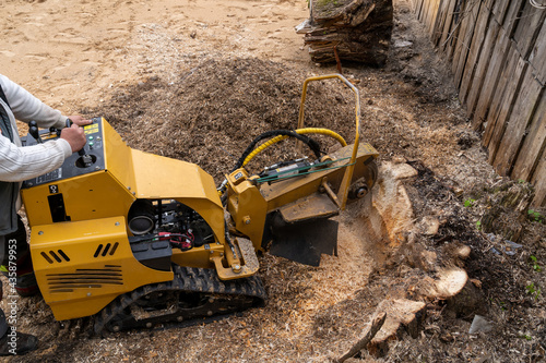 Fotografiet A large wooden stump is milled with a yellow stump cutter or grinder against the background of a plank wall