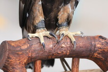 The Claws Of A Bird Of Prey