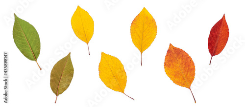 Fotografering Colored dry autumn leaves isolated on white background