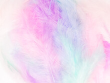 Beautiful Abstract Light Pink Feathers On Colorful Background, Colorful Feather Frame On Green Purple And Blue Texture Pattern, Pink Background, Love Theme Wallpaper, Valentines Day, White Gradient