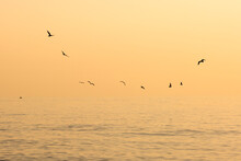 Flock Of Seagulls  In The Morning Flying Over The Sea