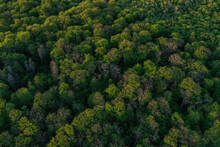 Hambach Forest Top View Of The Treetops With Fresh Green Foliage, Morschenich Brown Coal Field