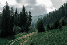 Old Dirt Road Overgrown With Grass Among Tall Coniferous Trees In Forest, Mountainside Overgrown With Trees And Cloudy Sky.