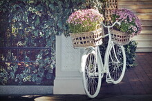 Vintage White Bicycle With Flower In Retro Basket As Designed Element Near House Entry Before Marble Staircase. Modern Garden With Retro Design. Home Entry With Flowerbed From Old White Bike.