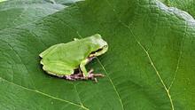 Frog88