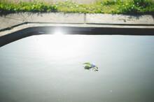 池に浮かぶ葉