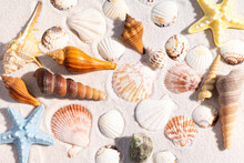 Summer Background With Seashells And Conch Shells On The Sand