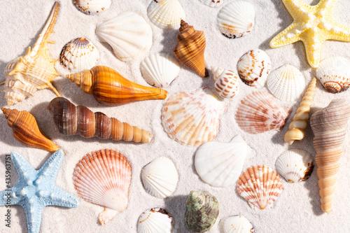 Slika na platnu Summer background with seashells and conch shells on the sand
