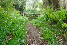 Nature Trail, Whiteford, Gower Peninsula , Wales, UK