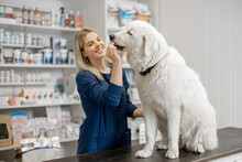 Female Veterinarian With Big White Dog Sitting On Reception In Veterinary Clinic While Assistant Gives A Treat To Pet . Pet Care And Treatment