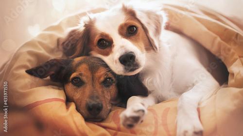 Obraz na plátně Two dogs friends