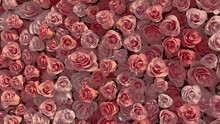 Romantic Flowers Arranged To Create A Pink Wall. Bright, Colorful Background Formed From Elegant Roses. 3D Render