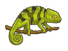 Chameleon Lizard Sketch Raster Illustration