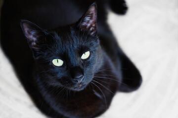 Czarny kot patrzący w obiektyw. Wyraźne zielonkawe oczy, rozmyte tło.