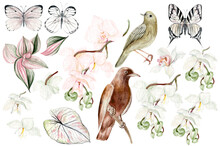 Watercolor Set With Orchids Flowers, Buds And Tropical Leaves, Birds And Butterflies.