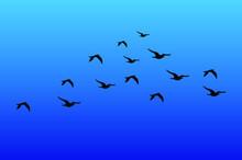 Birds In Blue Sky, Migration