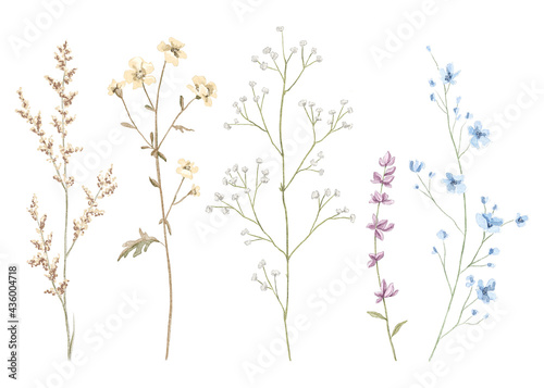 Fotografiet Watercolor set with meadow dried flowers isolated on white background