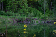 Beautiful Green Spring Summer Forest With A Hearty Water Pond In It. Dead Trees Have Fallen Into The Water.