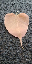 Leaf On Stone