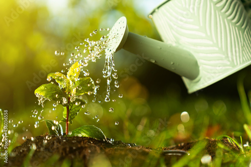Fotografie, Obraz Closeup watering can pouring water on green plant