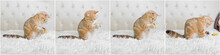 Little Red Ginger Striped Kitten Playing With Toy Mouse On White Bed. Adorable Cat Concept