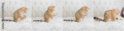 Canvastavla little red ginger striped kitten playing with toy mouse on white bed
