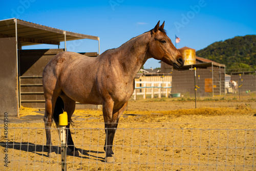 Obraz na plátně Brown gelding standing peacefully on a sunny field in a farm under a clear blue