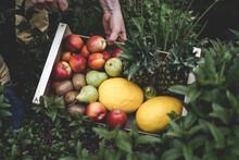 Mann Hält Eine Kiste Aus Holz Voll Mit Frischem Obst. Bunter Obstkorb Mit Organischem Obst (Melone, Birne, Ananas, Kiwi, Banane, Apfel) In Der Hand Von Einem Starken Mann