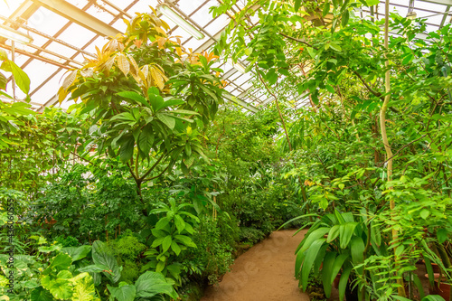 Tropical thickets of plants in a humid greenhouse. Fototapeta
