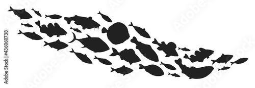 Valokuva Fish collection