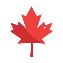 Maple Leaf Nature