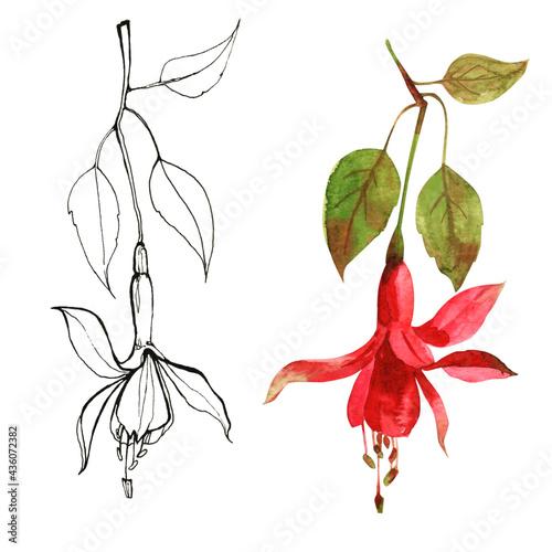 Fotografie, Obraz Delicate watercolor and graphic drawing in fuchsia color.