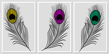Minimalistic Peacock Feathers - Wall Art Vector Set.  For Wall Art, Poster, Wallpaper, Print.