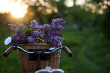 Vintage Bike With A Bouquet Of Lilac Flowers In The Wicker Basket In The Summer Apple Garden
