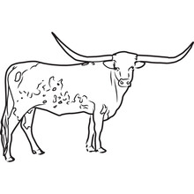Hand Sketched, Hand Drawn Texas Longhorn Cow Vector