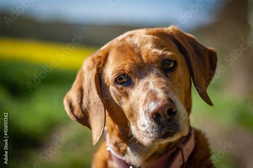 Fotografie, Obraz chien en pleine nature