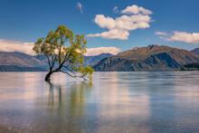 Famouse Beautiful Wanaka Tree At Golden Hour Time, Lake Wanaka, South Island, New Zealand