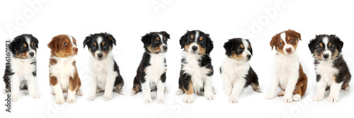 Fotografie, Obraz group of puppy isolated on white background