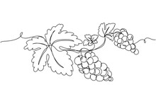 Continuous One Line Of Bunches Of Grapes With Leaf In Silhouette. Linear Stylized.Minimalist.