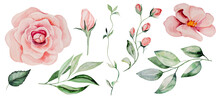 Watercolor Pink Roses And Green Leaves Illustrations